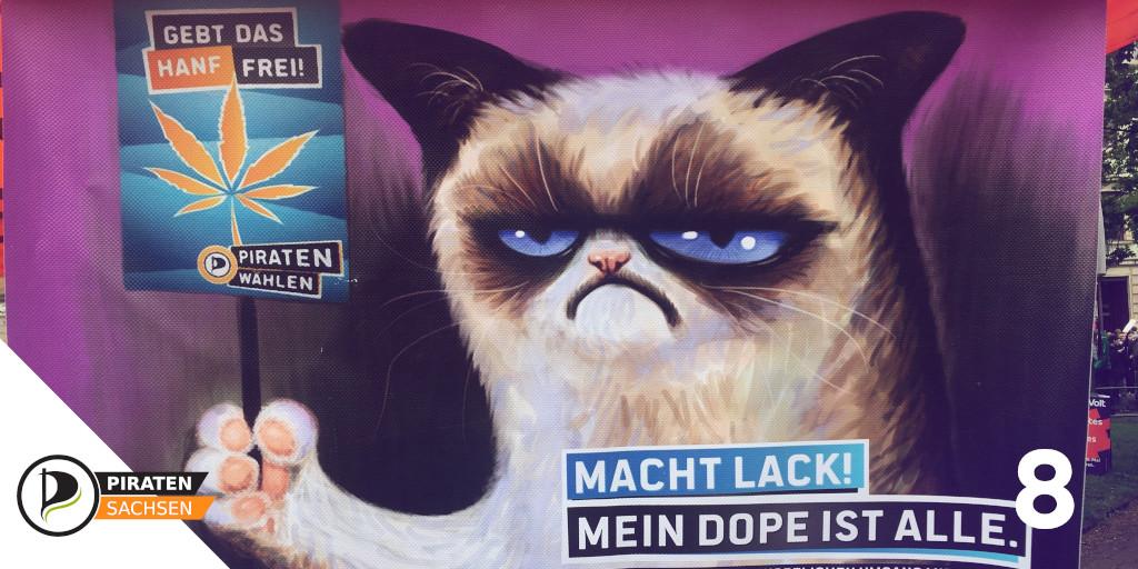 Grumpy Cat zum GMM